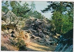SEINE-ET-MARNE - FONTAINEBLEAU - Forêt - Escalier - Fontainebleau