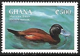 GHANA - MNH - 1995 -   Maccoa Duck    Oxyura Maccoa - Canards