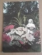 3^ EUROFLORA A GENOVA 24 APRILE - 2 MAGGIO 1976   (9) - Esposizioni