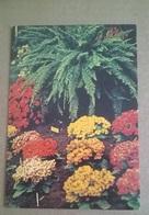 4^ EUROFLORA A GENOVA 23 APRILE - 3 MAGGIO 1981   (8) - Esposizioni