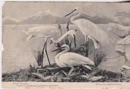 White Cranes, Series 18, Birds Of Australia - C1900-1920, Unused, See Notes - Unclassified