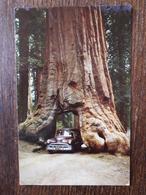 L21/987 ETATS UNIS. WAWONA TREE . YOSEMITE . NATIONAL PARK CALIFORNIA - Yosemite
