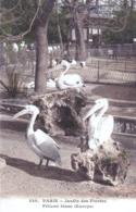 75 - PARIS  05 - Jardin Des Plantes - Pelican Blanc - District 05