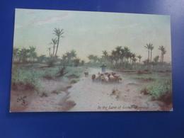 "Picturesque Egypt. In The LAND Of GOSHEN ( Evening ) ."" Raphael Tuck Oilette - - Tuck, Raphael"