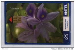 Uruguay TC465a Flores -Camalote- - Uruguay