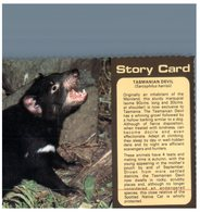(1116) Australia - Tasmanian Devil (2 Cards) Endengered - Tigres