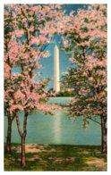 Washington D.C   Washington Monument And Cherry Blossoms - Washington DC