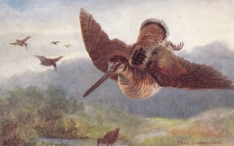Hunting Jagd Chasse  Schnepfe  Woodcock  Becasse  Oiseaux  Geflügel Eileen Drummond  Old Cpa. - Caza