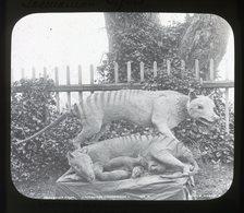 Tasmanian Tigers (model) AUSTRALIA - Magic Lantern Slide (lanterne Magique) - Glasdias
