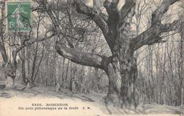 Robinson (92) - Un Coin Pittoresque De La Forêt - Le Plessis Robinson
