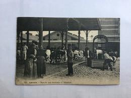 ANTWERPEN 1922  ANVERS  MARCHE AUX BESTIAUX A L' ABATTOIR    PRACHTIGE ANIMATIE - Antwerpen