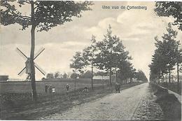 Cortenberg - Une Vue De Cortenberg. (windmolen) - Kortenberg