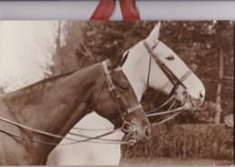 AR44 Mounted Horse Photograph - Photographs