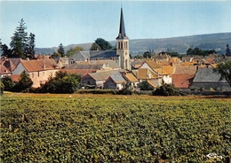 ¤¤   -  SANTENAY   -  Les Vignes    -   ¤¤ - Other Municipalities