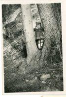 Enfant Kid Fille Girl Jeu Arbre Tree Snapshot Composition Caché Hidden Dad Père Papa Happy Cute - Persone Anonimi
