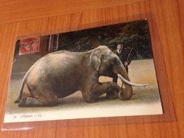 ELEPHANT -  (port à Ma Charge ) - Elefantes