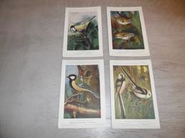 Beau Lot De 20 Cartes Postales Oiseaux  Oiseau  Illustrateur H.Dupond     Mooi Lot Van 20 Postkaarten Van Vogels  Vogel - 5 - 99 Cartes
