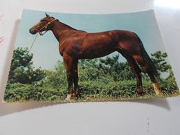 B731  Cavallo Non Viaggiata - Caballos