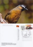 India  2019  Birds  Nilgiri Laughing Thrush  Stamp Card  # 20627   D Inde  Indien - Songbirds & Tree Dwellers
