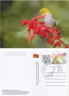 India  2019  Birds  Oriental White Eye  Stamp Card  # 20621   D Inde  Indien - Songbirds & Tree Dwellers