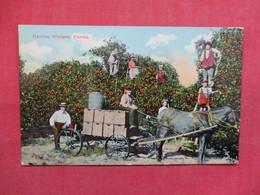 Hauling Oranges     Florida  Ref 3497 - Other