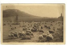 Carte Postale Ancienne En Provence - Troupeau De Moutons Au Pied De La Montagne Des Cordes - Agriculture - Autres Communes