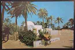 GABES - TUNISIE - L'OASIS     Vg - Tunisia