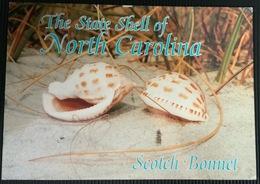 AK USA The State Shell Of North Carolina ...Muscheln ...Shells - Poissons Et Crustacés