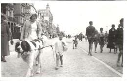Photo Ancienne  BELGIQUE - ( Blankenberge ) 1931 - Enfant Et Chien Saint Bernard - 11x7 Cm - Lieux