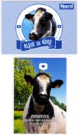 Lot 2 CP / Vache / Bleu Du Nord / Imminence, égérie Du Salon De L'agriculture 2019 - Vaches