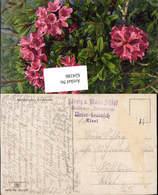 624186,Reklame AK Stp. Unter Leutasch Unterleutasch Gasthaus Donnerrose N. Kufstein - Werbepostkarten