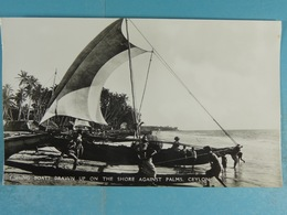 Fishing Boats Drawn Up On The Shore Agains Palms Ceylon - Sri Lanka (Ceylon)
