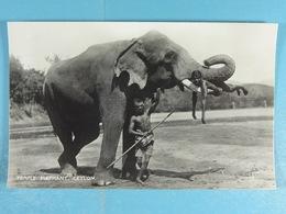 Temple Elephant Ceylon - Sri Lanka (Ceylon)