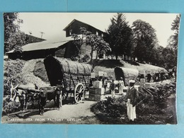 Carting Tea From Factory Ceylon - Sri Lanka (Ceylon)