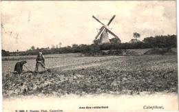 1 Postkaart Kalmphout Calmphout Molen Aan Den Veldarbeid  C1903  Uitgever Hoelen - Kalmthout