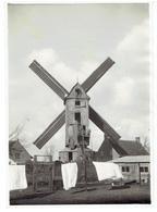LOO - Lo-Reninge - Foto 17 X 12 Cm - Koren Torenkotmolen - Windmolen - Lo-Reninge