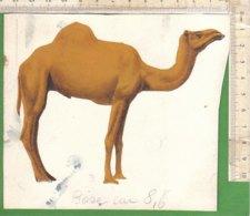 PO8915D# FIGURINA DIPINTA A MANO HAND PAINTED - ANIMALI - DROMEDARIO - Dieren