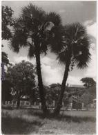 Boma - & Photocard - Belgisch-Congo - Varia