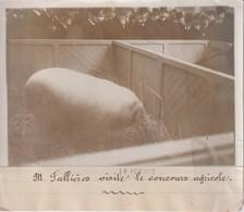 M FALLIÈRES VISITE LE CONCOURS AGRICOLE  18*13CM Maurice-Louis BRANGER PARÍS (1874-1950) - Fotos