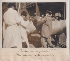 CONCOURS AGRICOLE  LA VISITE VÉTÉRINAIRE VETERINARIO DIERENARTS VET   18*13CM Maurice-Louis BRANGER PARÍS (1874-1950) - Profesiones