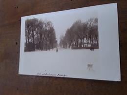 Cartolina Postale Fotografica 1902, Firenze, Cascine, Viale Del Re - Firenze (Florence)