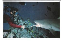 Maldives - Malediven - Shark Of Bandos Island Resort - Hai Fish Diving - Nice Stamp Timbre - Maldiven