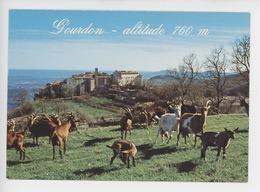 Gourdon Altitude 760 M (troupeau Chèvres Chèvre) - Gourdon