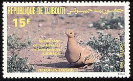 Djibouti. Ganga à Ventre Brun. Chesnut-bellied Sandgrouse - Gallinacées & Faisans