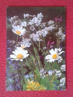 POSTAL POST CARD FLOR FLORES MARGARITA ? MARGARITAS ? FLOWER FLOWERS DAISY ? Pâquerette ? STAMP FINLAND SUOMI FLEURS.... - Flores
