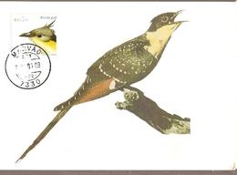 Portugal & Maximum Card, Cuco-Rabilongo, Clamator Glandarius, Marvão 2002 (6682) - Cuckoos & Turacos