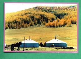 Mongolia Mongolie A Golden Automn - Mongolie