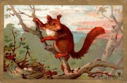 IMAGE (49) - Ecureuil Squirrel Texte Au Dos En B.Etat - Vieux Papiers