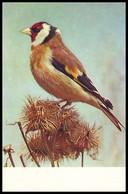 BIRDS. EUROPEAN GOLDFINCH - Carduelis Carduelis. USSR, 1975. Unused Postcard - Birds