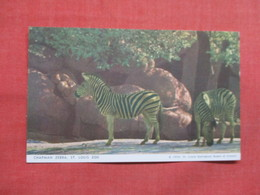 Chapman Zebra ---------- St Louis Zoo              Ref 3507 - Zebra's